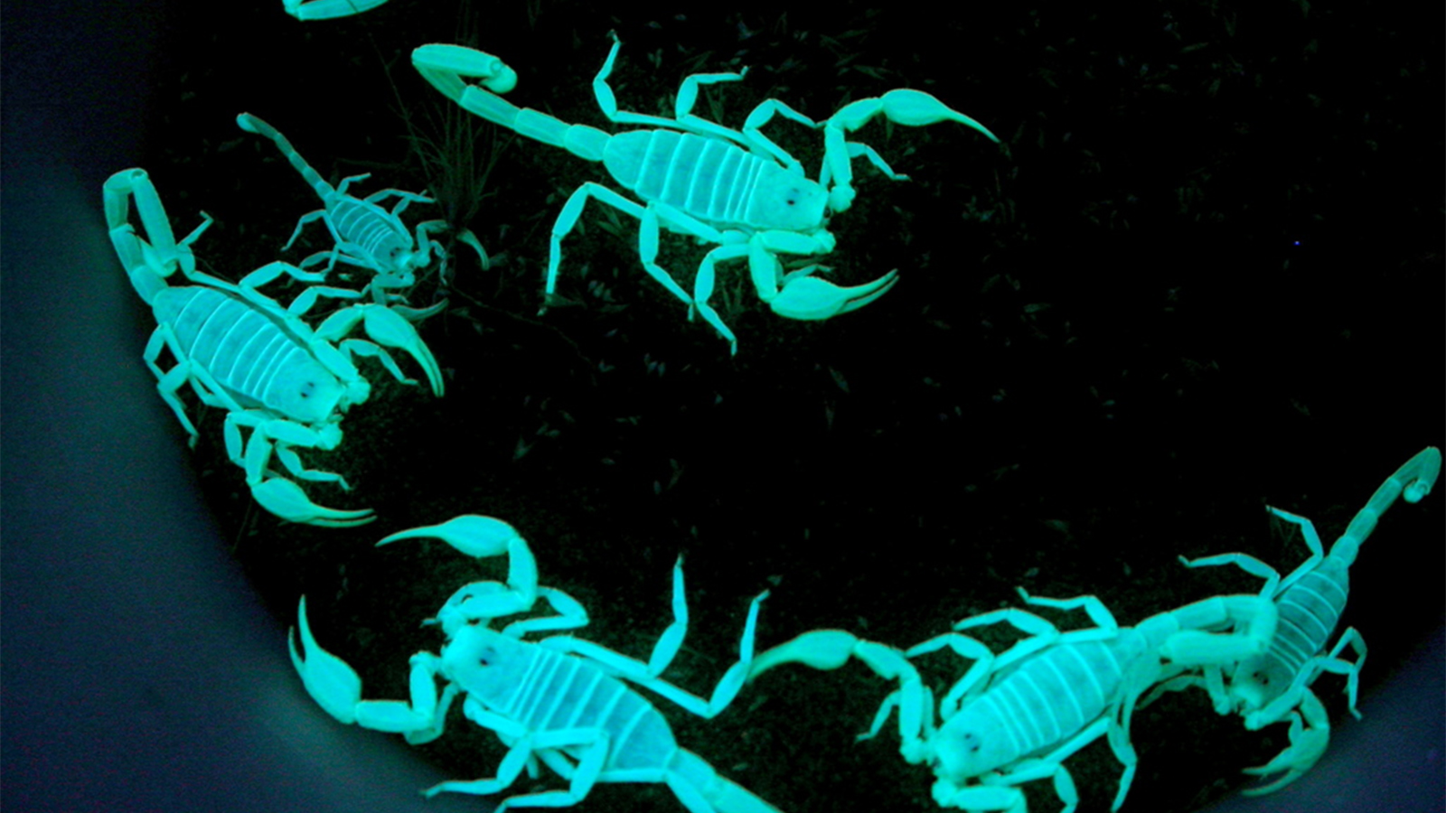 A Dozen (or more) Objects that Fluoresce Under a Black Light